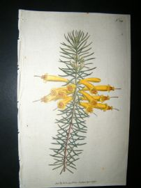 Curtis 1792 Hand Col Botanical Print. Great-Flowered Heath 189